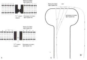 Ионные токи через мембрану