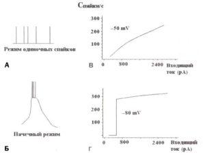 Тонический и пачечный режимы пульсаций таламокортикальных нейронов