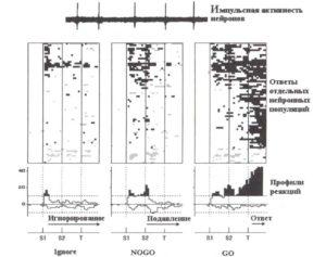Профили нейрональных реакций в подкорковых структурах