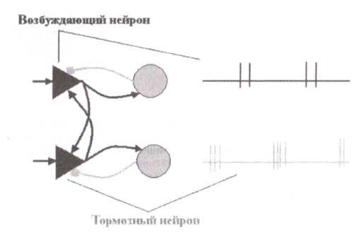 Нейронная модель бета-колебаний