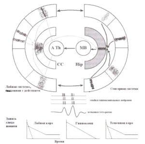 Гиппокамп как устройство картирования памяти