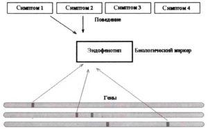 Эндофенотипы как биологические маркеры проявления генетических свойств в поведенческом паттерне