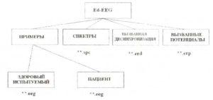 Организация файлов в папке WinEEG