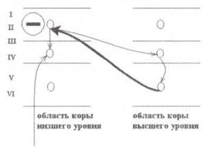 Схематическое представление сети нейронов, обеспечивающих функцию внимания