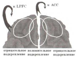 Схематическое изображение процессов положительного и отрицательного подкрепления на уровне орбитофронтальной коры