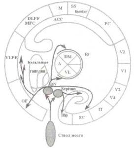 Холинергические проводящие пути системы эпизодической памяти