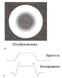 Пример латерального торможения (полоса Маха) в зрительной системе