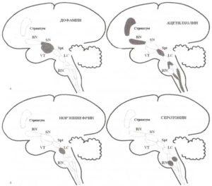 Холинергические и моноаминергические нейроны мозга
