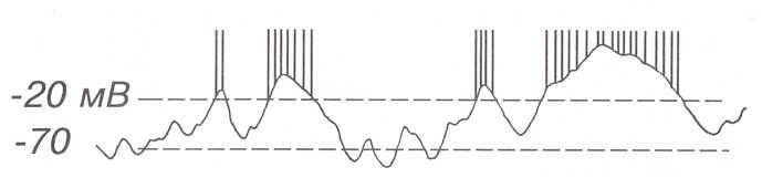 Соотношения между колебаниями уровня соматодендритных ПСП с генерацией нейроном спайков.
