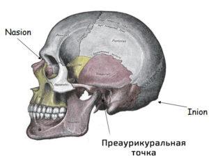 анатомические ориентиры