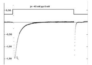 Са2+-ток рабочего кардиомиоцита