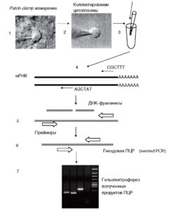 Принципы анализа РНК одиночной клетки