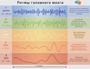 Ритмы головного мозга
