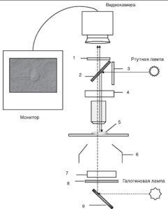Схема установки для использования оптики с дифференциальным интерференционным контрастом (DIC) параллельно с флуоресцентной микроскопией