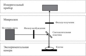 Принципиальная схема экспериментальной установки для измерения флуоресцентных сигналов