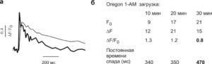 Влияние внутриклеточной концентрации красителя на амплитуду и кинетику Са2+-ответов
