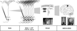 биоэлектрической активности мозга, методы регистрации, SUA, MUA, LFP, ECoG, EEG, MEG