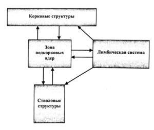 Блок-схема функциональной организации ЦНС