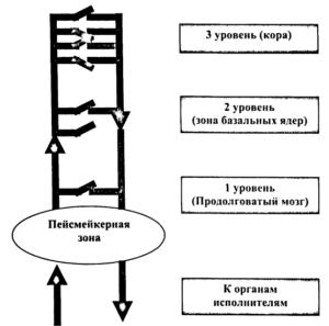 Схема формирования эпилептического очага в корковых структурах