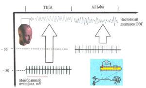 Зависимость частотного диапазона суммарной ЭЭГ от уровня поляризации мембраны таламических нейронов