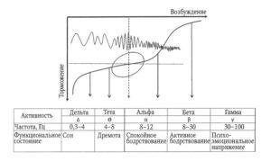 Отражение в параметрах ЭЭГ основных нервных процессов